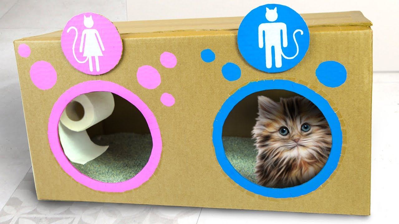 Diy cat toilet craft ideas for kids on box yourself youtube diy cat toilet craft ideas for kids on box yourself solutioingenieria Gallery