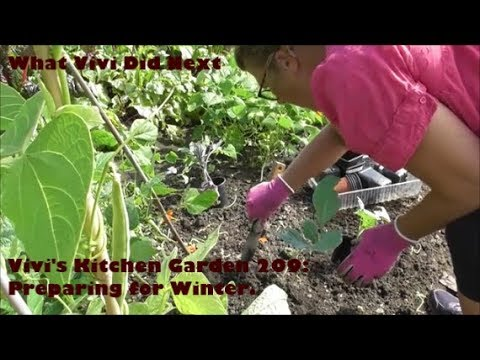 vivi's-kitchen-garden-209:-preparing-for-winter.