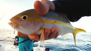 Flourocarbon Test on Yellowtail Snapper in the Keys