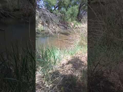 Fishing The San Pedro River Walk Back
