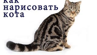 как нарисовать кота How to draw a cat #draw step by step
