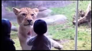 """дети и животные"""" непоседы""""супер прикол видео"""