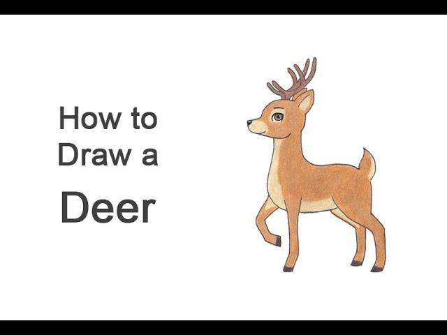 How To Draw A Deer Cartoon Youtube