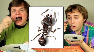 Mrówki z Puszki - Dem i Gurgie