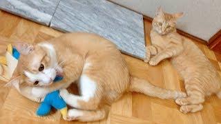 猫パンチならぬ猫キックとはこういうこと!超高速キックをしまくる猫