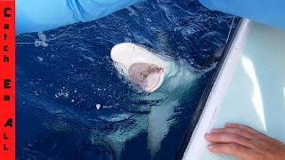 WHY SHARKS ARE A PROBLEM NOW! Can barely catch a fish NOW WATCH! DANGEROUS WATERS NOW!