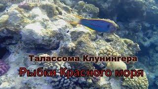 Название рыб Красного моря