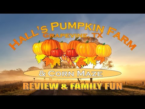 Hall's Pumpkin Farm & Corn Maze - Grapevine, TX