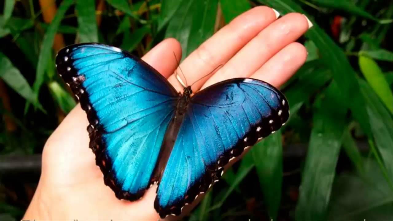 Mariposa Monarca Nuevo Doodle De Google Significado De La