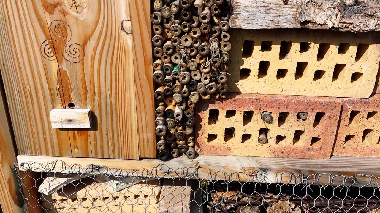 les bourdons de retour dans l 39 h tel insectes youtube. Black Bedroom Furniture Sets. Home Design Ideas