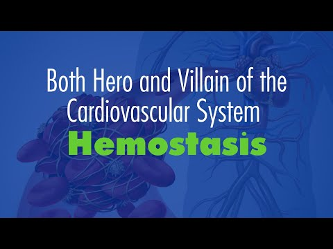 Hemostasis:  Both Hero and Villain of the Cardiovascular System
