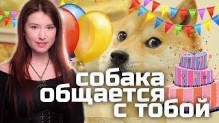 Собака общается с тобой и Неновостям шесть