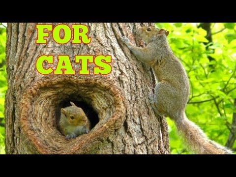 NEW ! Video For Cats To Watch: ' YOUR CAT GO CRAZY FOR THIS '