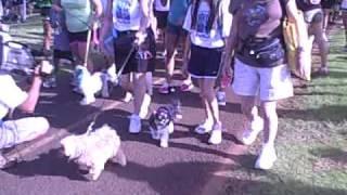 Pet Parade 2009  Honolulu  Pt. 1