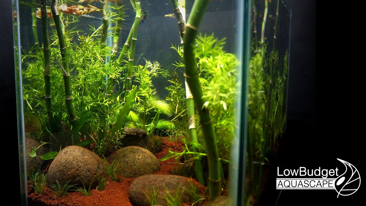 Bamboo Forest Aquascape Without Co2 Filter Nor Fertilizer Youtube