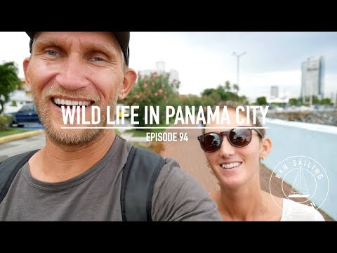 Wild Life In Panama City - Ep. 94 RAN Sailing