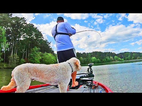Fishing SQUAREBILLS And CHATTERBAITS On Lake Guntersville!