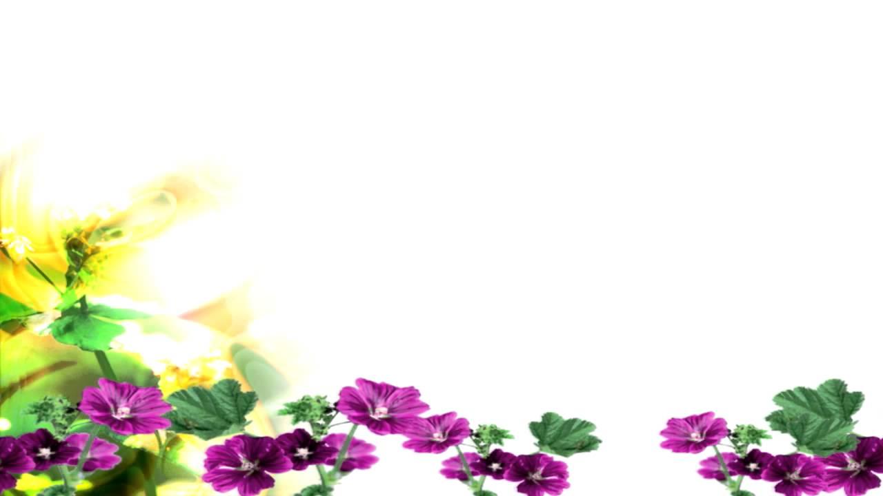 Best Bg Flower With White Free Motion Background Youtube