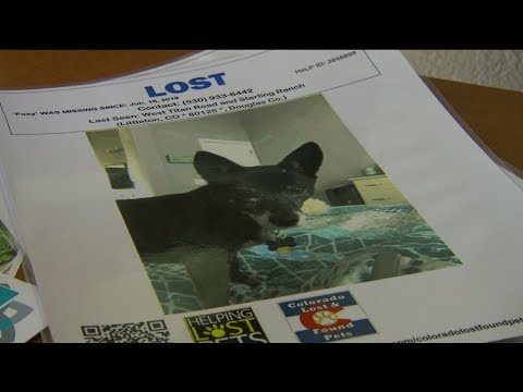 Family Just Wants Answers After Dog Escapes from Boarding Facility