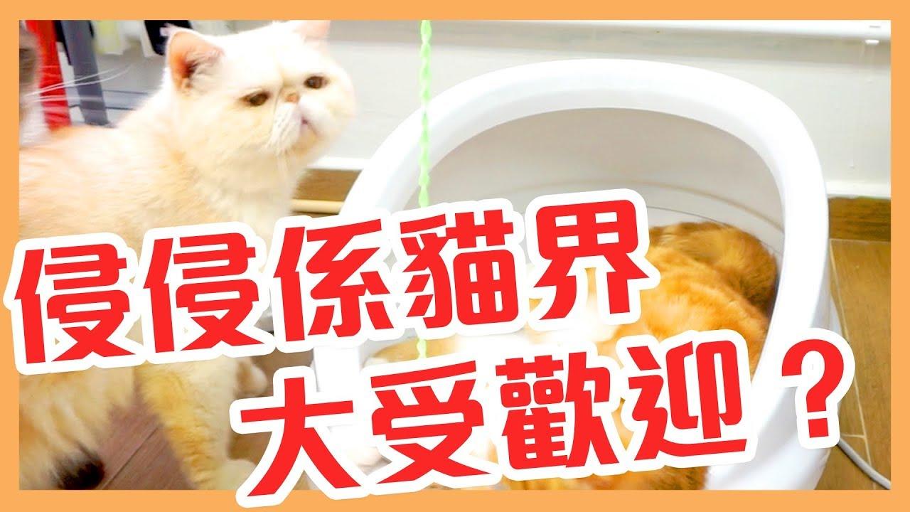 【淘寶開箱】又係貓貓用品?!滿意度5星星貓玩具貓窩!! - YouTube