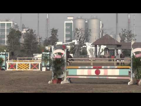 旦旦 DanDan 90cm 2013 SongSeng Equestrian Club Shanghai