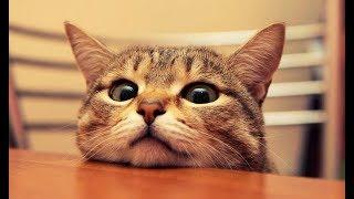 Что делает ваш кот, пока вас нет дома #2