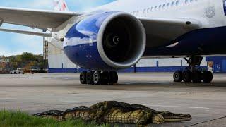 British Airways see you later alligator