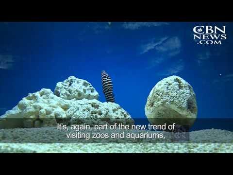 One-of-a-Kind Aquarium Comes To Jerusalem
