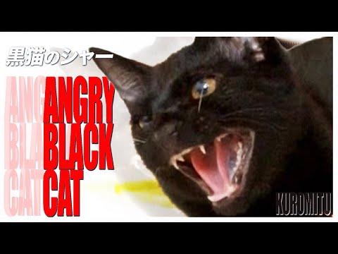 黒猫のシャー!!