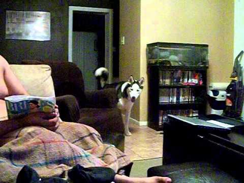 כלב מפחד מג`וליה רוברטס