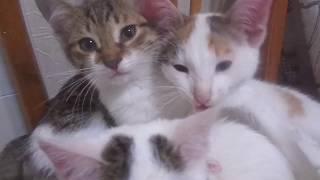 Милые котята мурлыкают! Отдадим в добрые руки, Нижний Новгород.