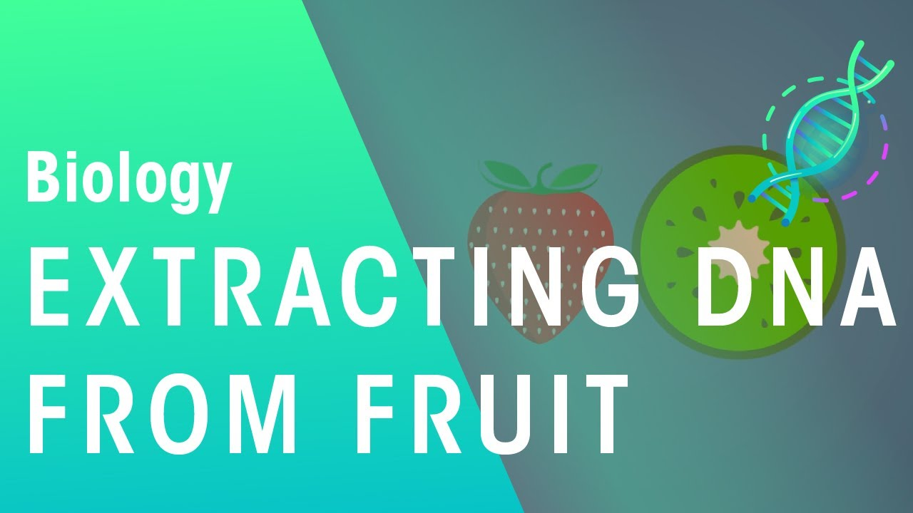 How Dna Can Be Extracted From Fruit Genetics Biology Fuseschool Youtube