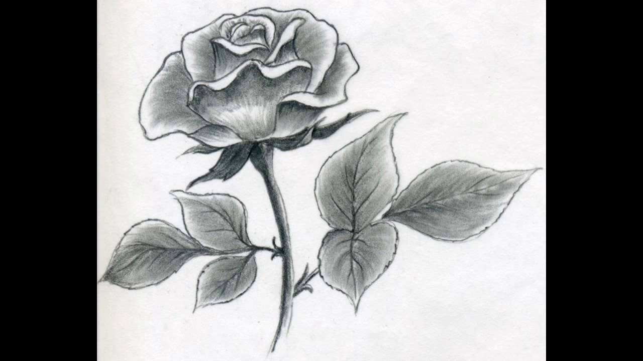 Simple Line Art Rose : How to draw a rose the simple method of drawing minutes youtube