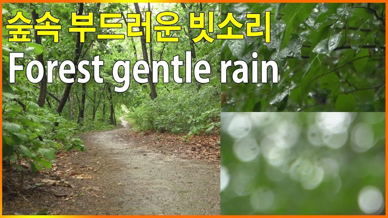 숲속 잠 잘오는 빗소리 1시간 - Forest rain sounds for sleeping 1 hours