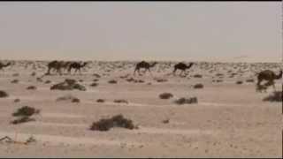 Marocco 2012  Tropico del Cancro