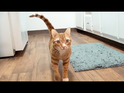 Funny Ways Your Cat Says He Loves You