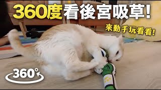 【黃阿瑪的後宮生活】用360度看後宮吸貓草可自由旋轉角度