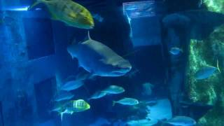 LONDON SEA LIFE AQUARIUM- OCEANARIUM W LONDYNIE