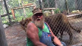 Lion Pees on Group of People at Zoo - 966419