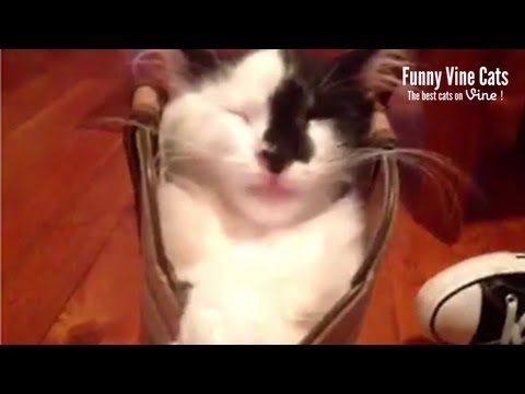Cat sleeping in a boot! – Funny Vine Cats #6