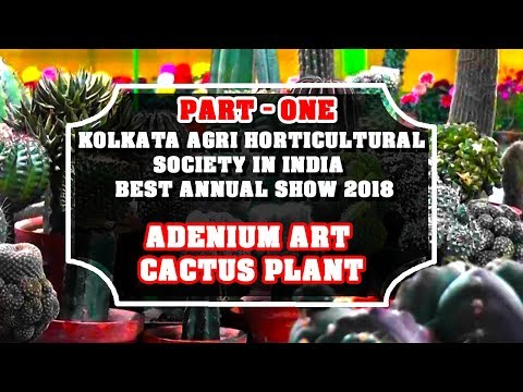 kolkata agri horticultural society in india  Best Annual show 2018(adenium  & cactus plant) part 1
