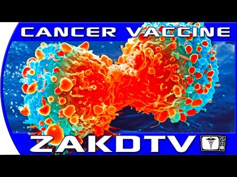 Stanford CANCER VACCINE  Stanford University Cancer research had a  breakthrough