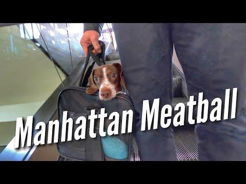 MANHATTAN MEATBALL  preparing for PetCon 2019