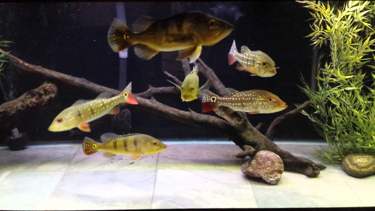 180 bass tank update new tile bottom youtube for Floor fish tank