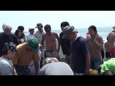 No.2-20130609 Jibiki Ami fishing by Oiso Ham Radio Club at Oiso Beach, Kanagawa Japan