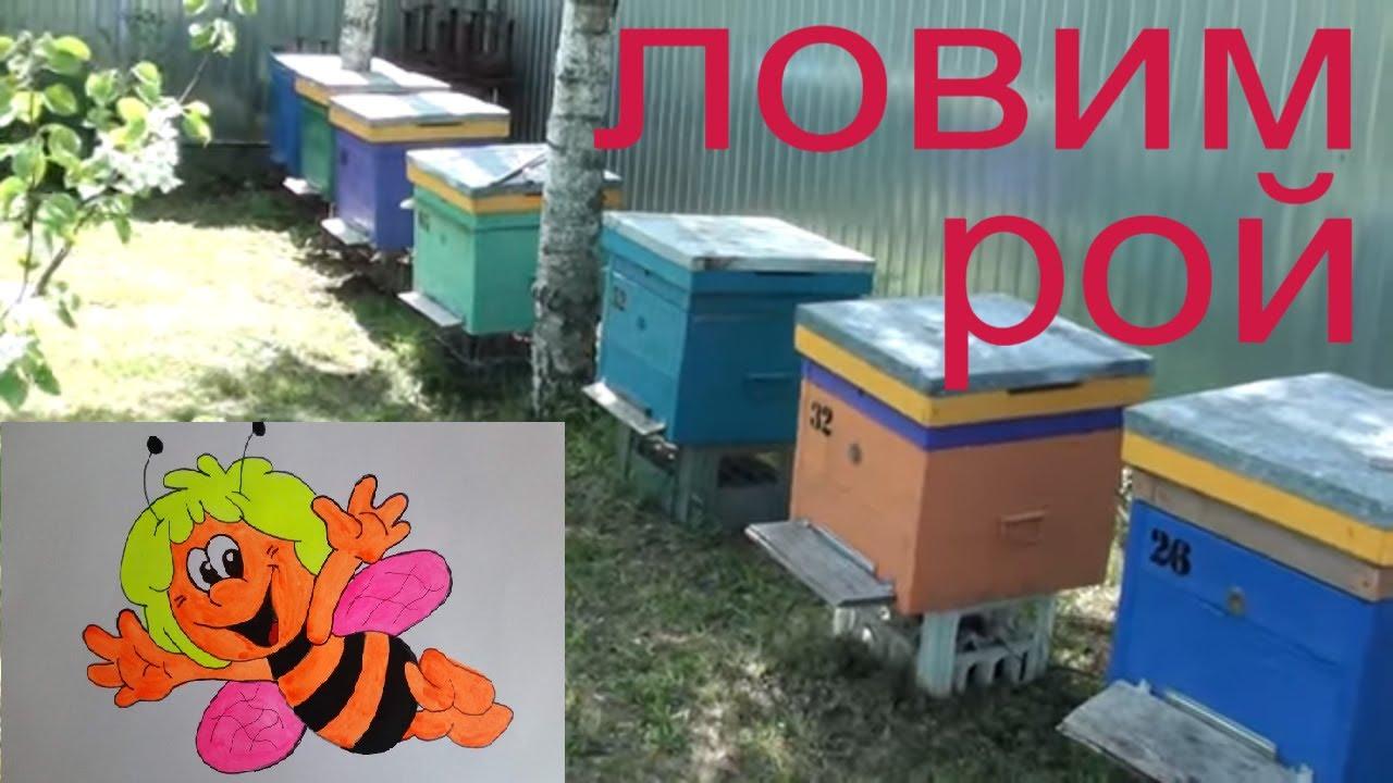 Как поймать рой пчел дома. Ловушка для пчел. Пчеловодство пчелы пасека