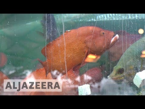 🇭🇰 Report: Hong Kong's appetite for reef fish 'unsustainable'