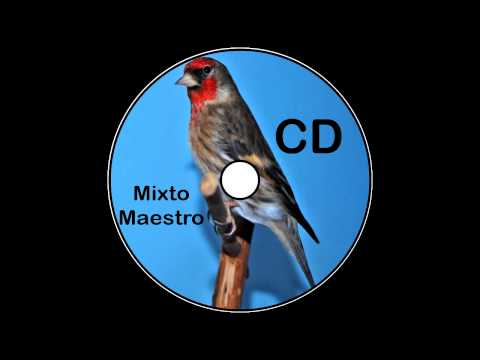 CD Mixto Jilguero Maestro