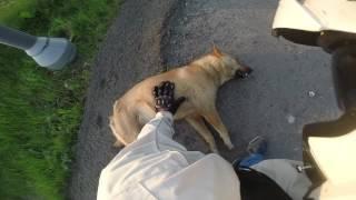 Собаку жалко...