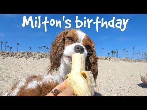 milton's-birthday-at-the-beach!